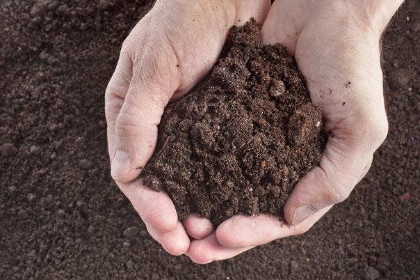 wymagania-glebowe-przedplony-1